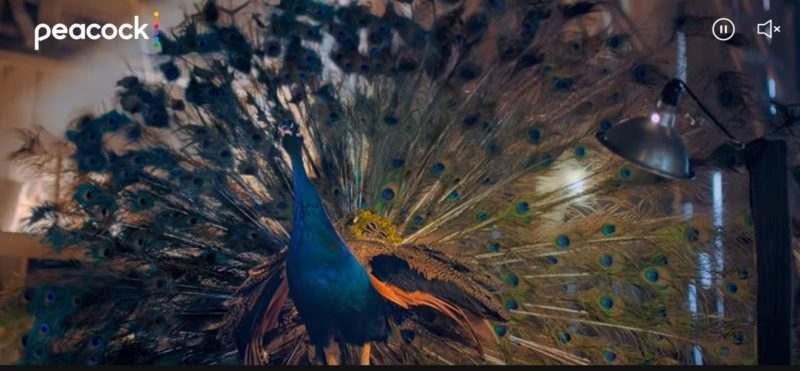 Peacock nedir, fiyatı, abonelik paketleri, ücret tarifesi, streaming dizi, film, TV içerikleri